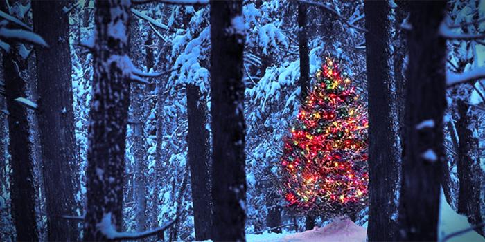 natural christmas trees oregonforests - Natural Christmas Tree
