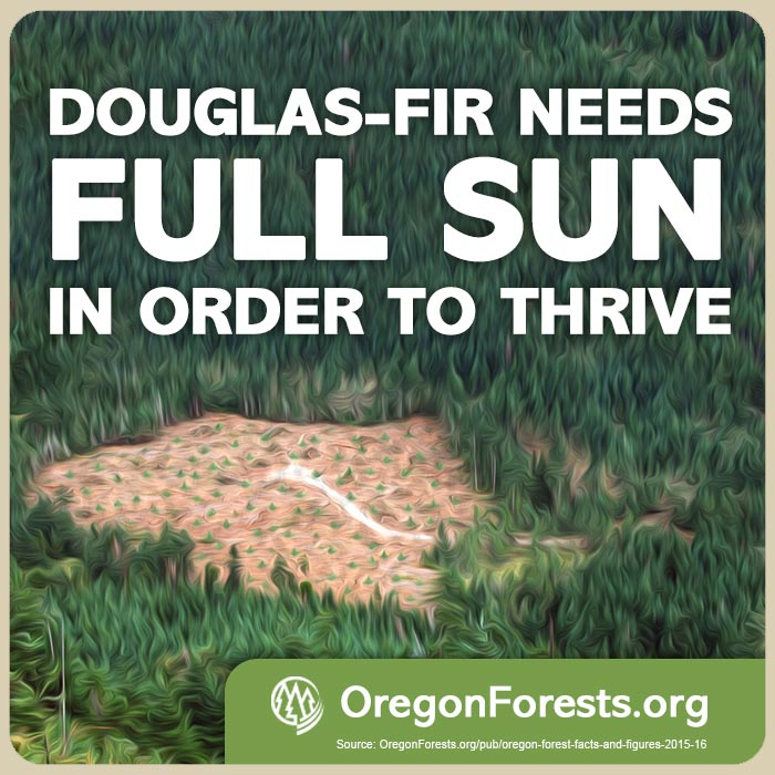Library Images 3 of MEME Gallery   OregonForests