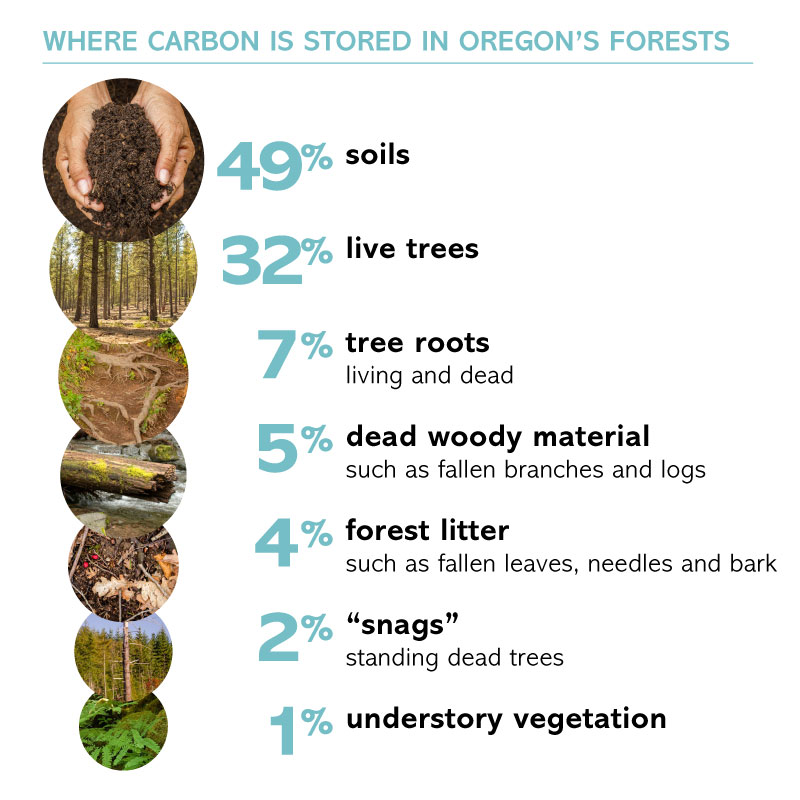 Carbon is stored in many pools in Oregon's forests