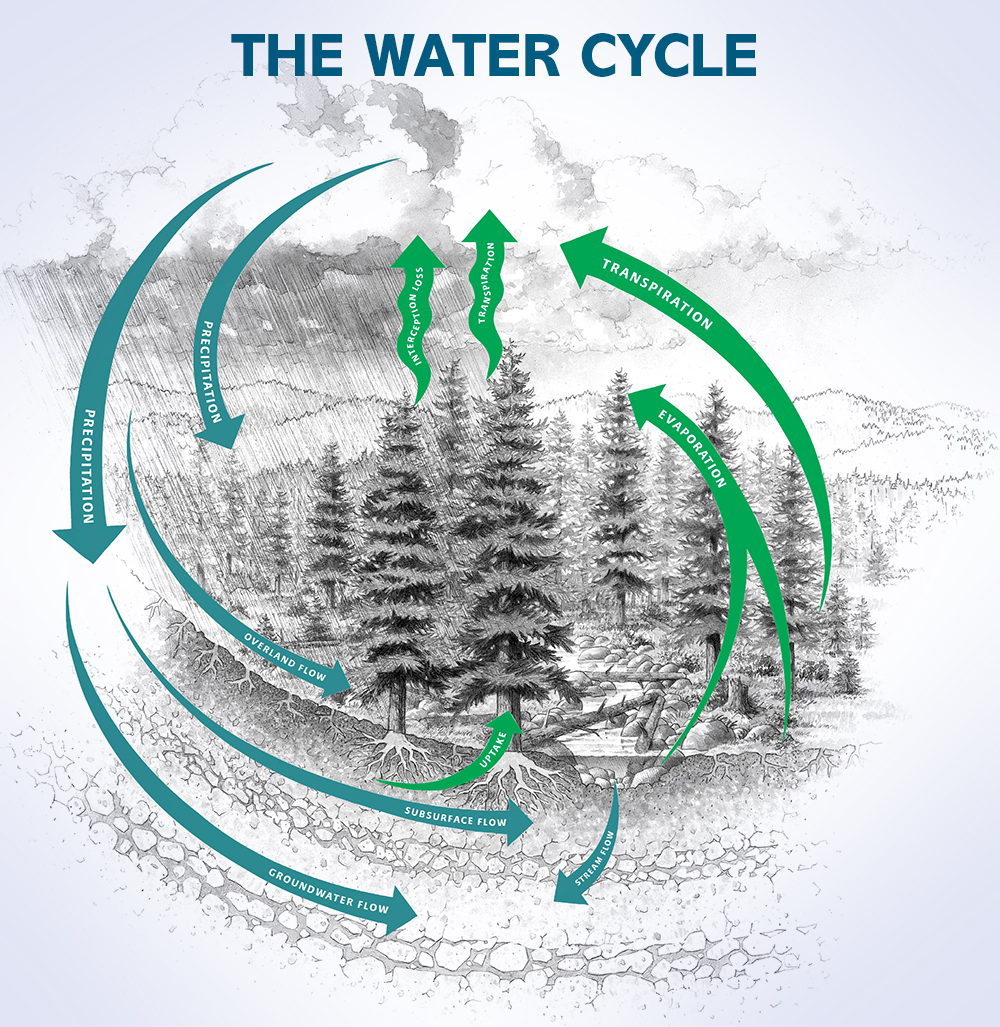 Diagram of the water cycle